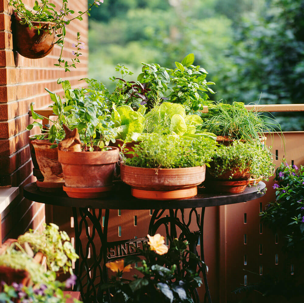 Example Of A Cluster Of Small Flower Pots On A Small Table In The Corner Of