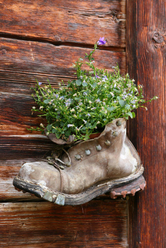 This old leather boot looks like it's been through the roughest of times. You wouldn't want to wear this watered down, faded version of a boot anymore but apparently this makes a good vessel for small purple flowers if you just take away the laces to allow more room for the plant. As you can see, it looks just perfect when you hang the boot on its side.