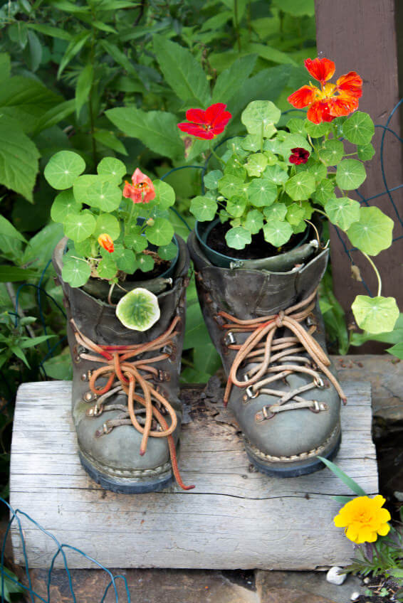 Another way to use boots as planters is by placing your small-sized plant pots inside worn out boots. Seal the pot tightly in by tying the boot laces in order to add more fit. As planters, discarded and faded boots give a more aesthetic look than boring plant pots.