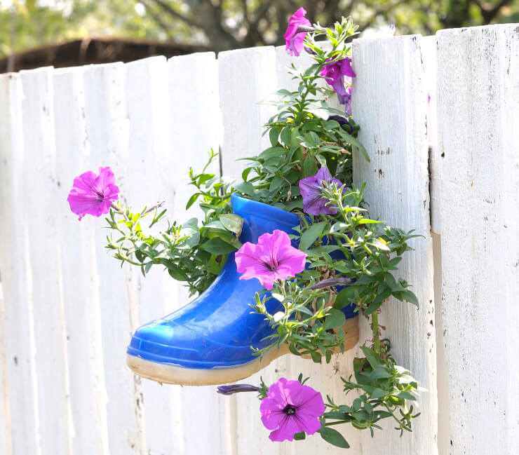 The bright color of this gumboot fixed on a white wooden picket fence is used as a flower pot and helps make the flowering plant vine look more noticeable.