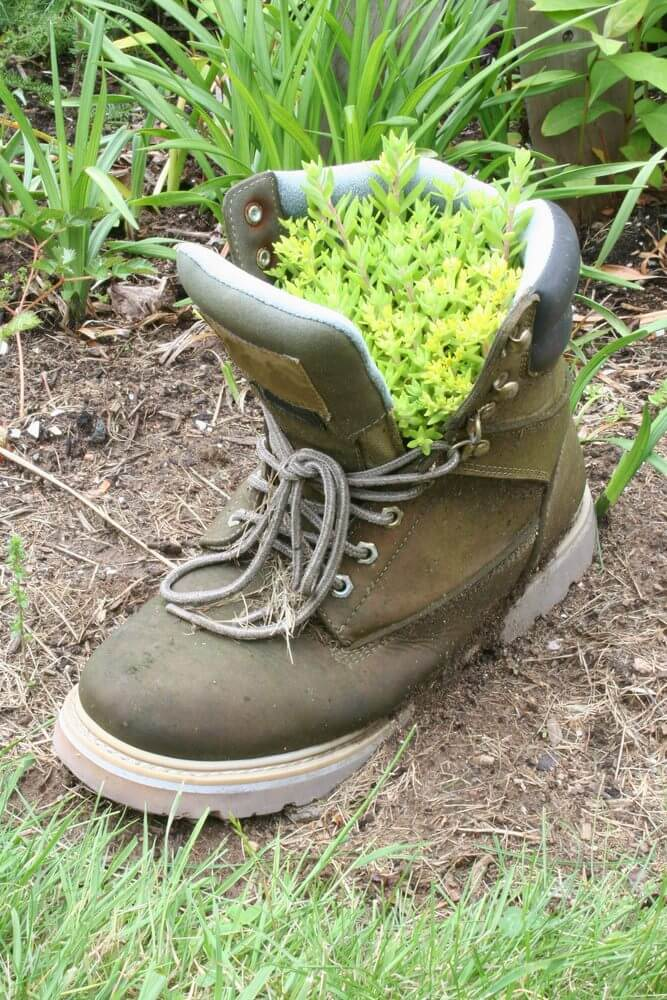 A soiled work boot looks just like it belongs in this outdoor part of the garden as it's used as a planter to hold a bunch of herbs.