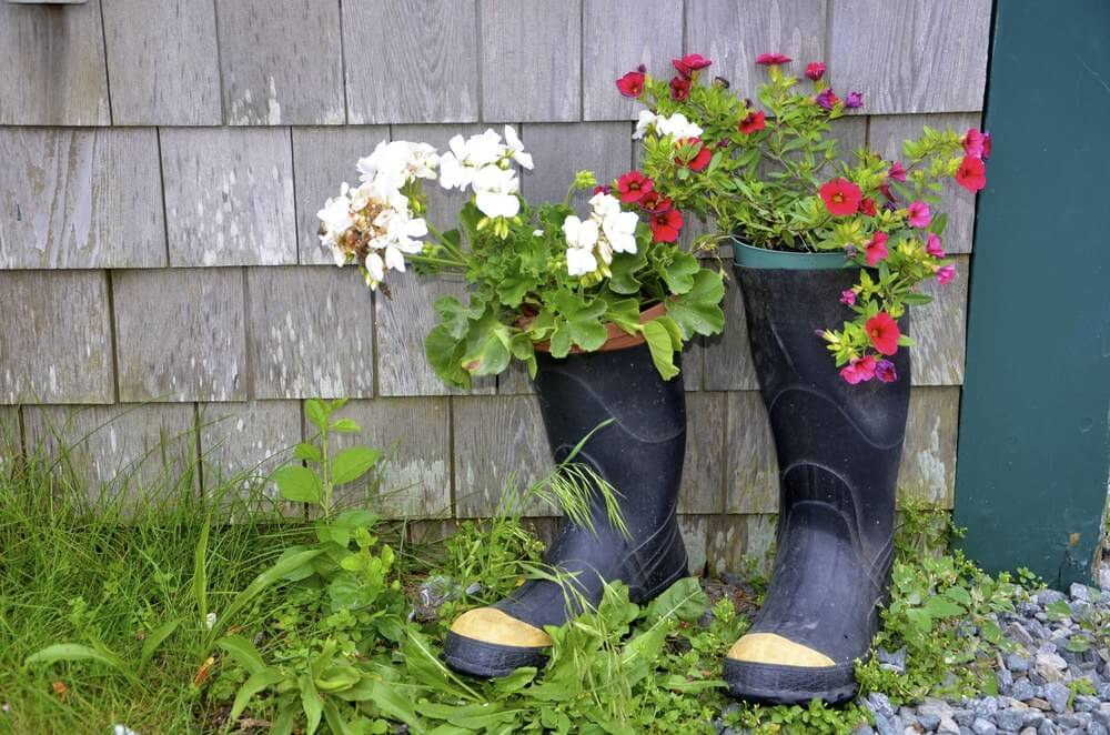 Colorful flowers in their old pots are placed inside this pair of black gumboots. The gumboots' self-effacing color makes these colored flowers stand out even more.