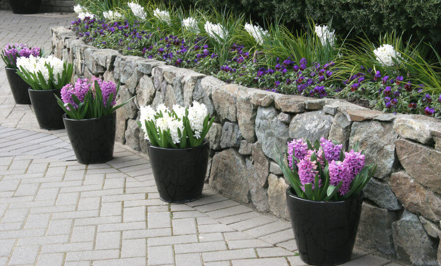 35 patio potted plant and flower ideas creative and lovely photos atio border lined up with hyacinths in black pots forming a lovely line of potted plants mightylinksfo