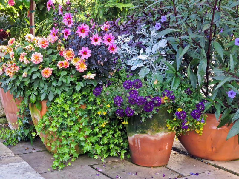 I love this dense flower display on the patio but it also serves as an example of how the aged pots detract from the overall effect.