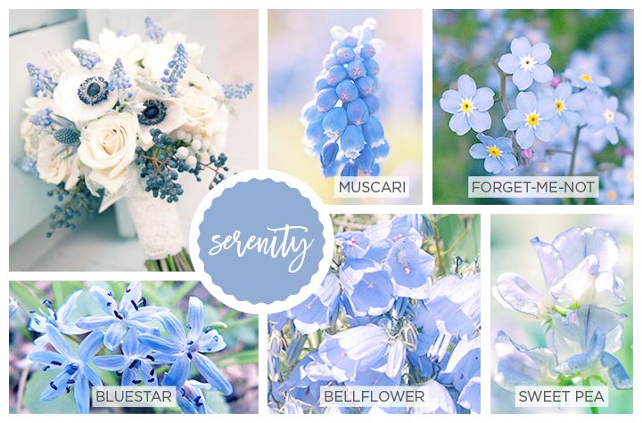 Blue Spring flowers including bluestar, bellflower, seet pea, muscari and forget-me-not.