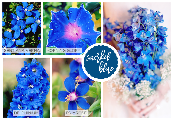 Snorkel blue Spring flowers: gentiana verna, morning glory, delphinium and primrose.