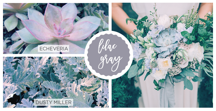 Lilac gray Spring flowers: dusty miller and echeveria.