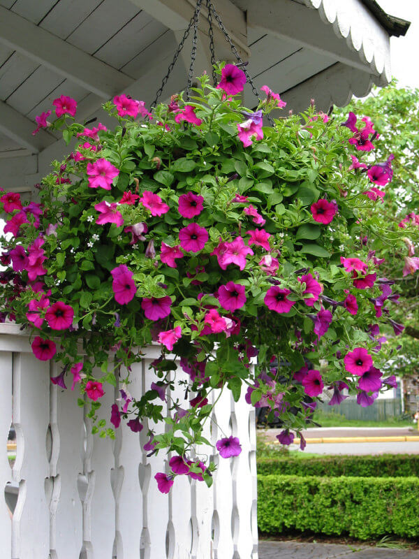 70 hanging flower planter ideas photos and top 10 heres a great example of pink hanging flowers against a white backdrop mightylinksfo