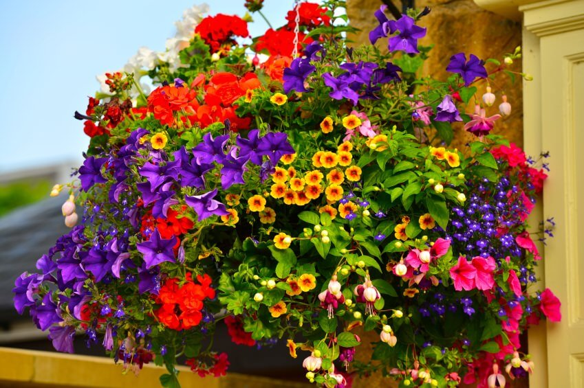 70 hanging flower planter ideas photos and top 10 home stratosphere a massive hanging basket filled with a huge variety of flowers so full you can mightylinksfo