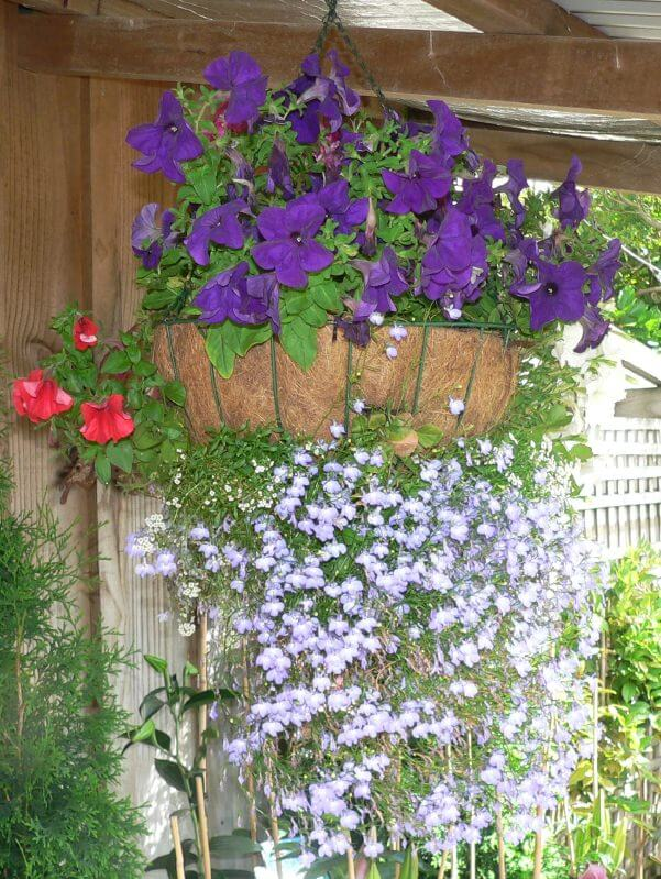 Hanging basket with purple flowers out the top and white small flowers draping through the organic basket hanging below.