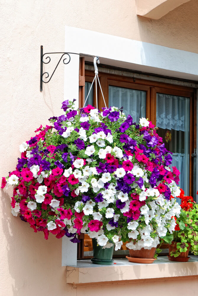70 hanging flower planter ideas photos and top 10 home stratosphere massive hanging flower basket exploding with purple pink and white flowers mightylinksfo