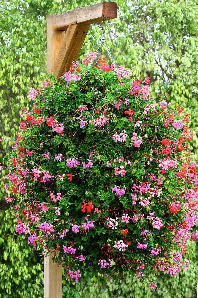 Who Has Hanging Flower Baskets On Sale : Hanging flower planter ideas photos and top
