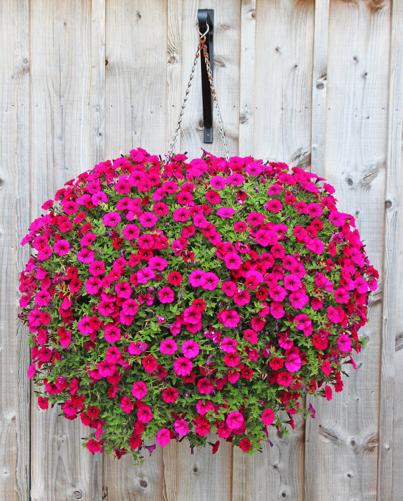 70 Hanging Flower Planter Ideas Photos And Top 10 Home Stratosphere