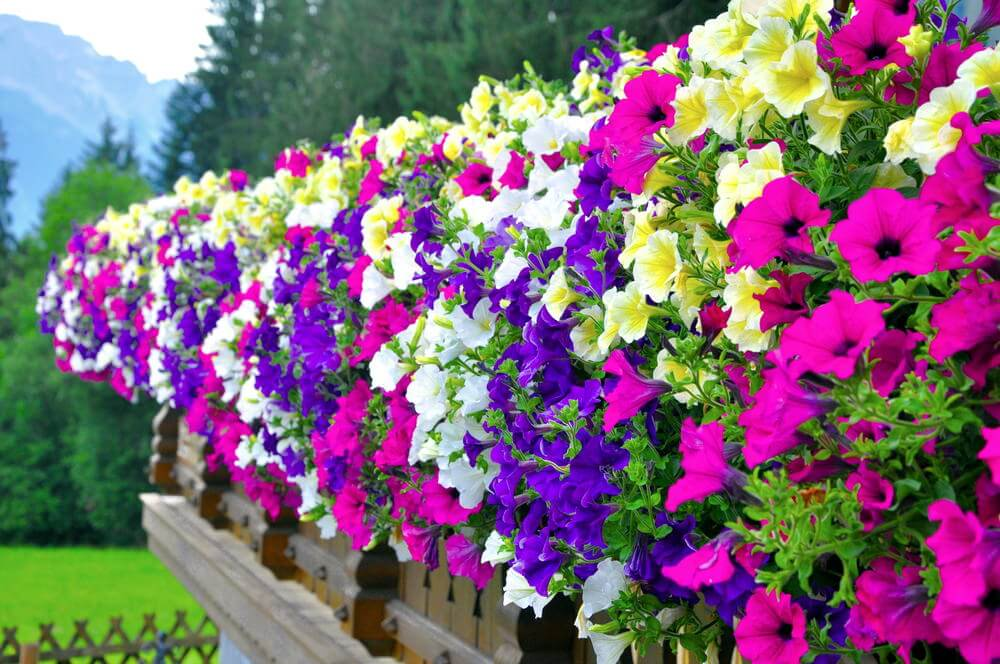 70 hanging flower planter ideas photos and top 10 home stratosphere now that is one beautiful fence because it is lined with a dance series of multi mightylinksfo