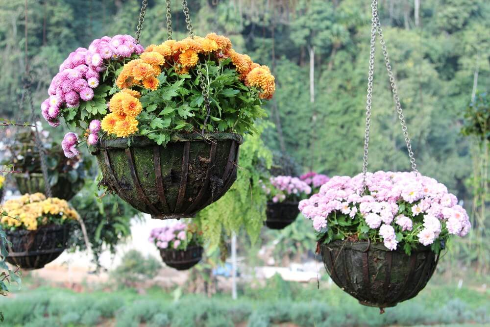 Photograph of several hanging flower baskets in a large open space.