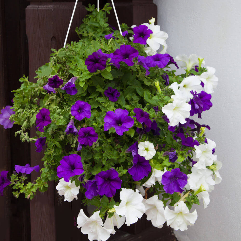 70 hanging flower planter ideas photos and top 10 home stratosphere photo of a purple and white flower arrangement and a hanging basket izmirmasajfo
