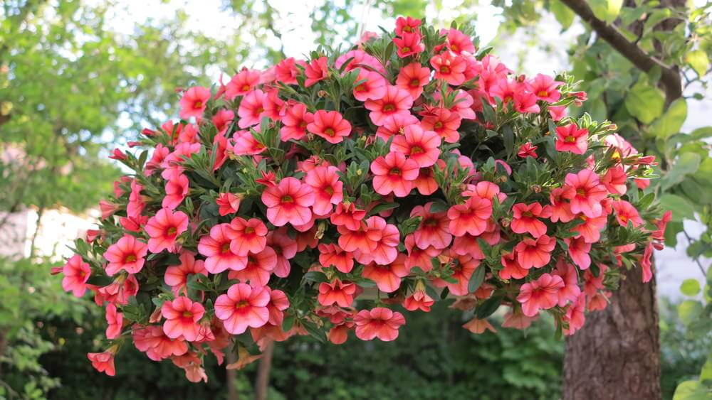 70 hanging flower planter ideas photos and top 10 example of a large all red flower hanging basket mightylinksfo