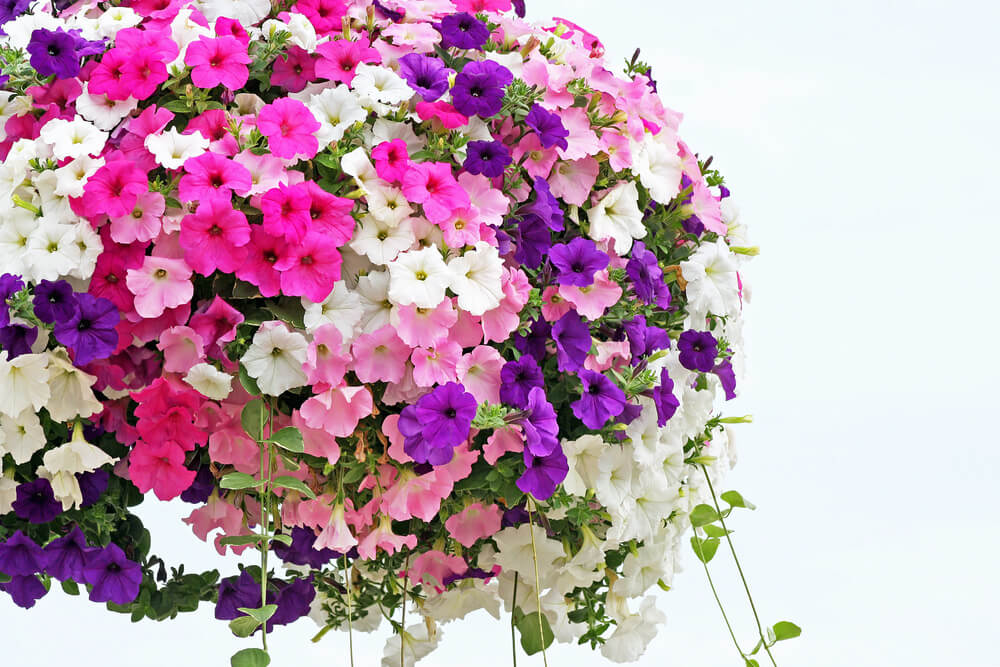 70 hanging flower planter ideas photos and top 10 home stratosphere petunias hanging flower basket mightylinksfo