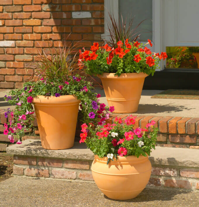 Round and elongated pots are still matching the outdoors steps. The colorful blossoms of petunias are planted with grass like plants to give the current mood a bit of change.