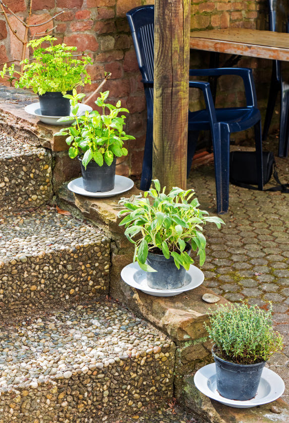 Pebbled concrete steps are decorated with herbs planted in small plastic pots. These plastic pots are also known as greenhouse garden pots.