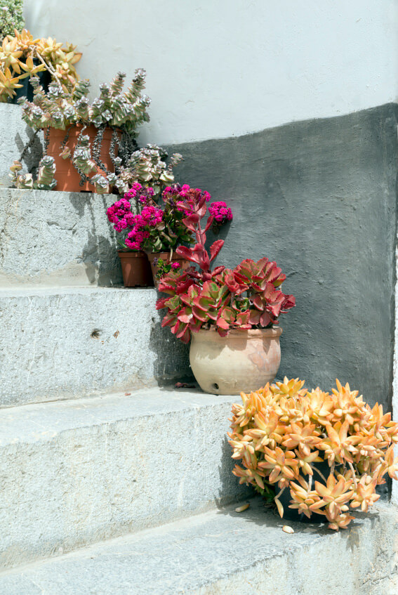 Ornamental plants can be either non-flowering or flowering and this image shows a mix of both. Some ornamental plants are best for shady outdoor steps or indoors but these plants seem to survive under the sun.