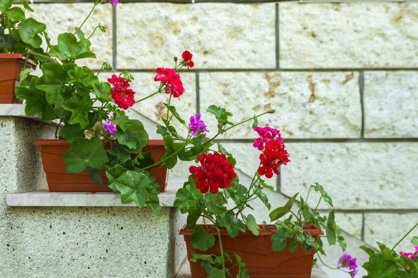 These are great shaped pots, as they can fit and sit perpendicularly to the steps' edges. Colorful vine flowers are planted into them, and these will later crawl and bloom flowers into an alley.