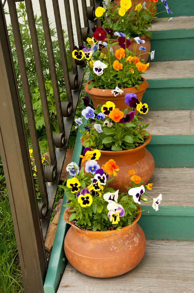 The dullness of the surrounding has been lessened and cured with the colorful blooms of pansies. It doesn't even bother having a rusty railing.