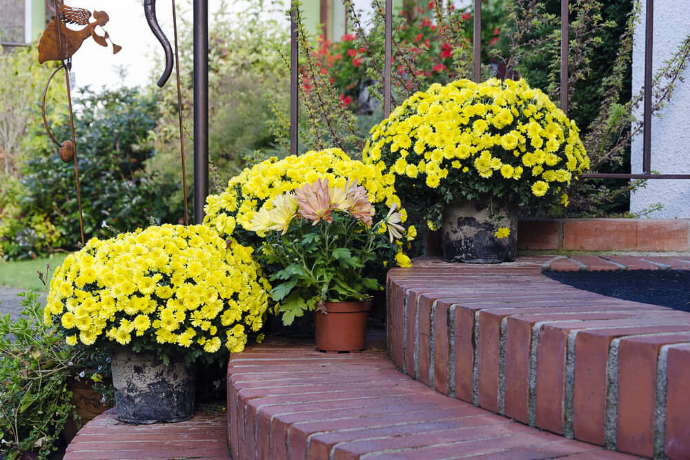 64 Outdoor Steps with Flower Planters and Pots Ideas (Pictures)