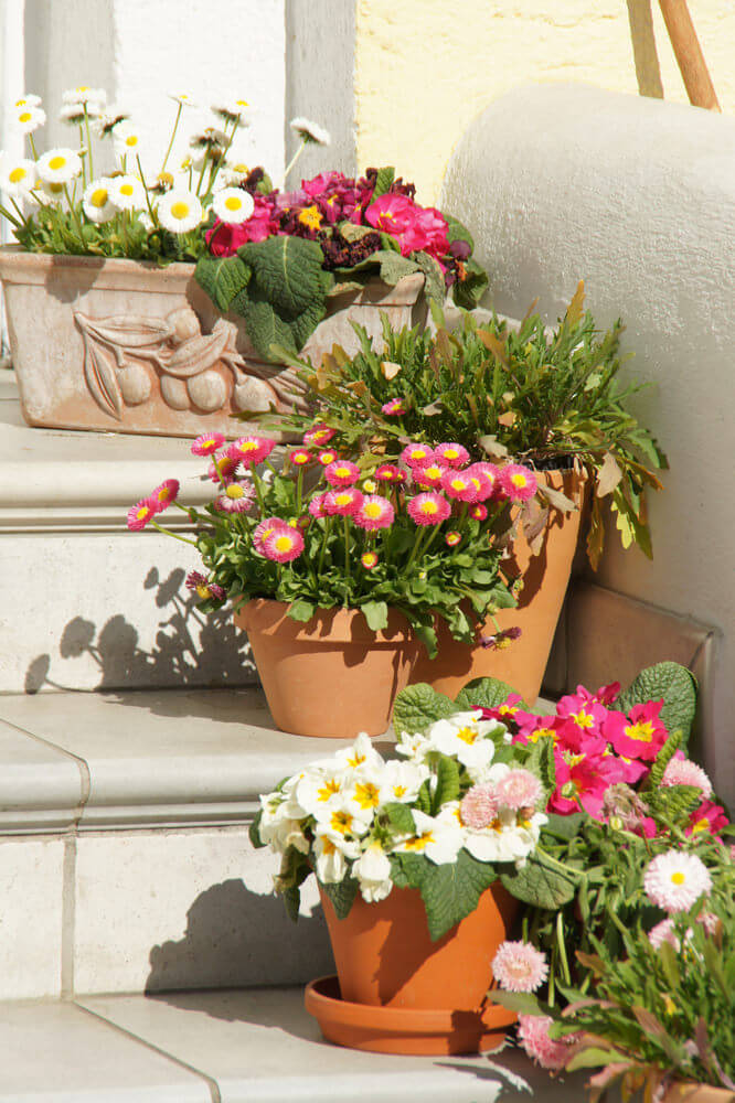 Square and round clay pots are perhaps different in sizes yet look pretty for chrysanthemums, daisies, begonias and petunias. As always, a white background wall and steps provide no distraction to the beautiful colors.