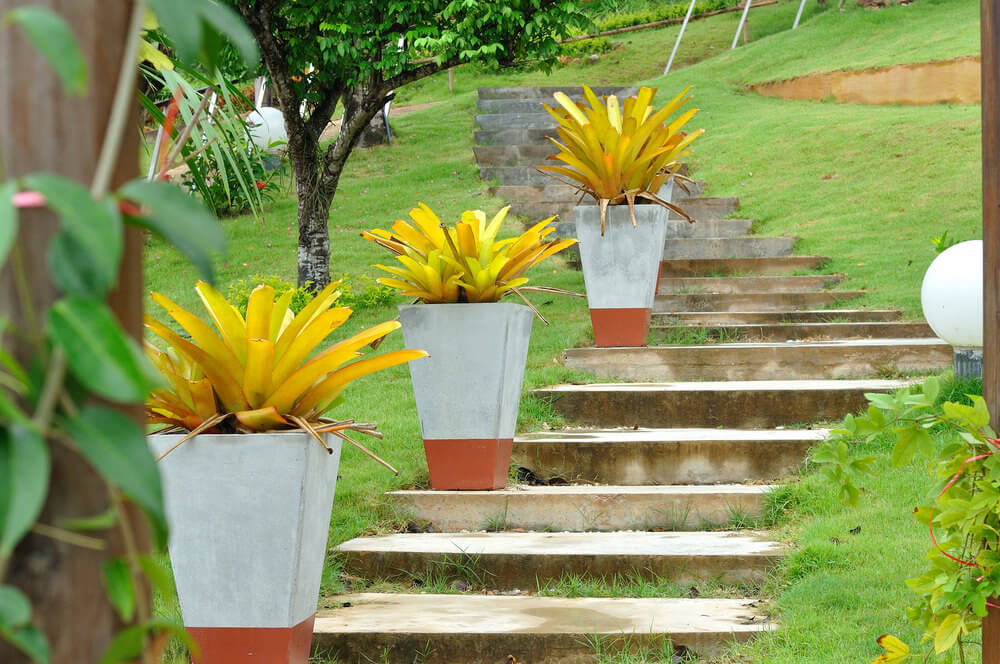 These are raw concrete planters painted on the bottom. Bromeliads, a pineapple like ornamental plant, are planted in them to resemble a fire torch.