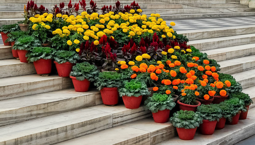 There are numerous pots planted with ornamental cabbage and flowers, aligned together on the steps.