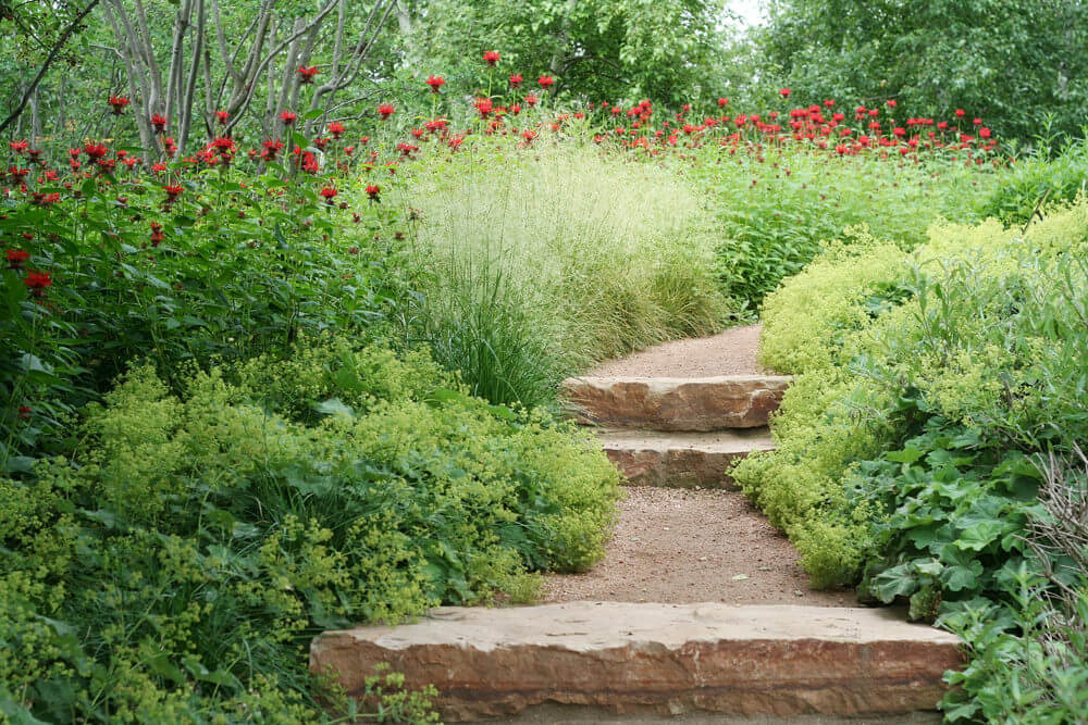 Red poppies are seen towering over a bed of varied greenery that almost completely cover up the garden steps made of occasional stone slabs. The almost complete cover by these garden plants can play with one's imagination, promising a secret garden nearby.