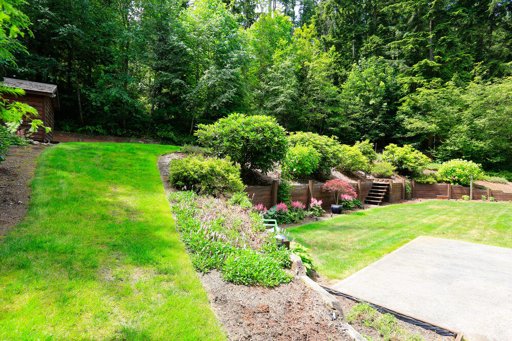 Pine trees can serve as an amazing backdrop to a large scale exclusive property. Evergreen shrubs can provide a good framework although at a smaller scale.