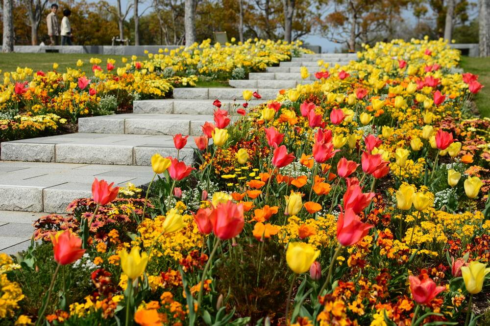 These Stone Garden Steps Are Conveniently Nestled Between Beds Of Beautiful  Tulips And Perennial Flowers In