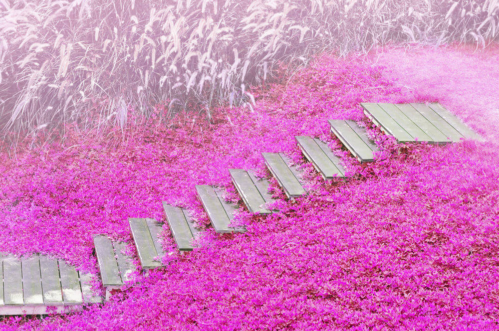 Wooden garden steps peek out from a carpet of festive pink flowers. The stunning glow of this pink garden will leave your senses entirely in rapture.