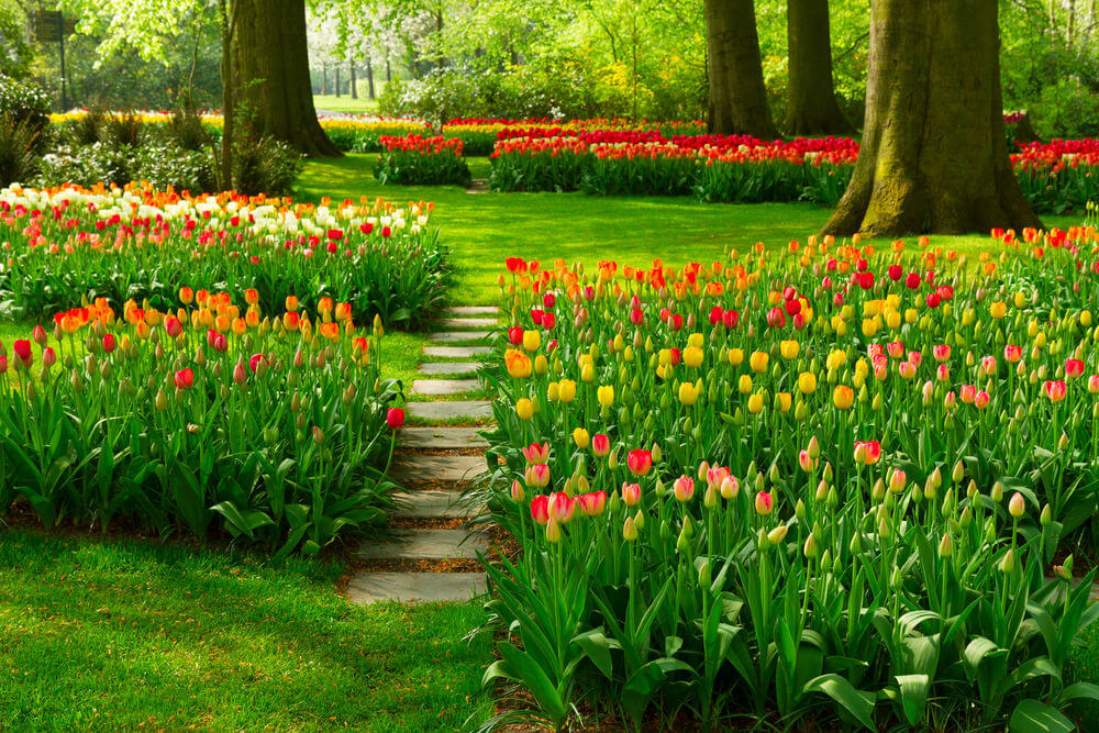 60 outdoor garden landscaping step ideas this garden of tulips is so spectacular to behold itll take a minute or workwithnaturefo