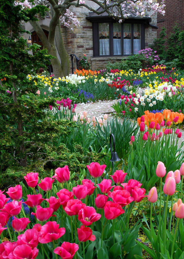 Fall in love with this spring flower inspired front yard. The design is dedicated to colorful tulips, daffodils, lirios, and other green plants. Not only that, the flowering dogwood stars in the scene.