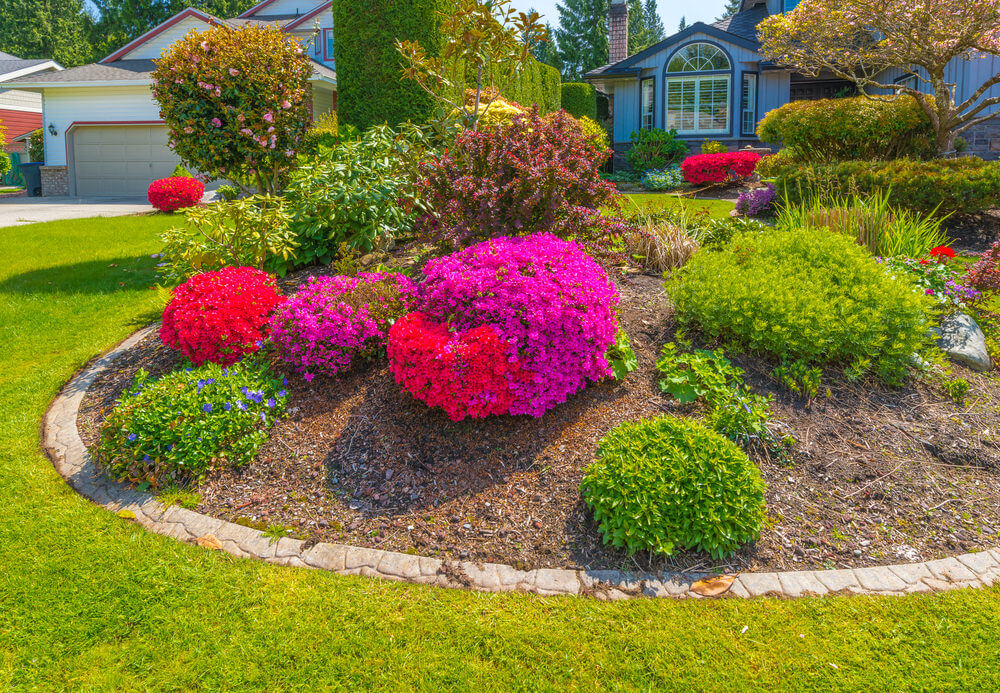 Petunia shrubs trimmed into rounds later bloom into a colorful floral craft. Along with these are trimmed greenery and shrubs.
