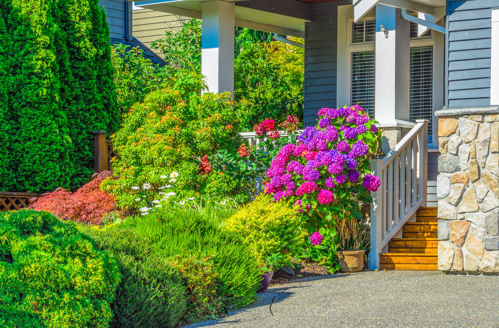 A simple path and a pebble foundation when ornamented with green shrubs and colorful Mophead hydrangea would look as peaceful and charming as this one shows.