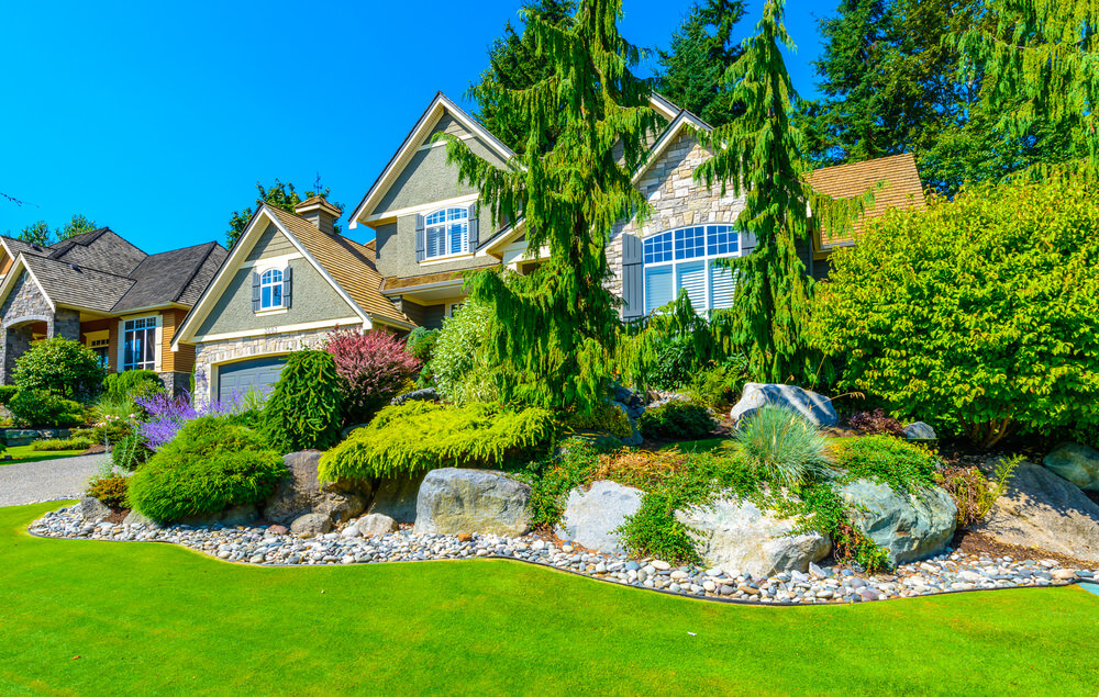This is a front yard inspired with a stony edging accompanied by huge rocks, green shrubs, and weeping Alaskan cedar trees in between.