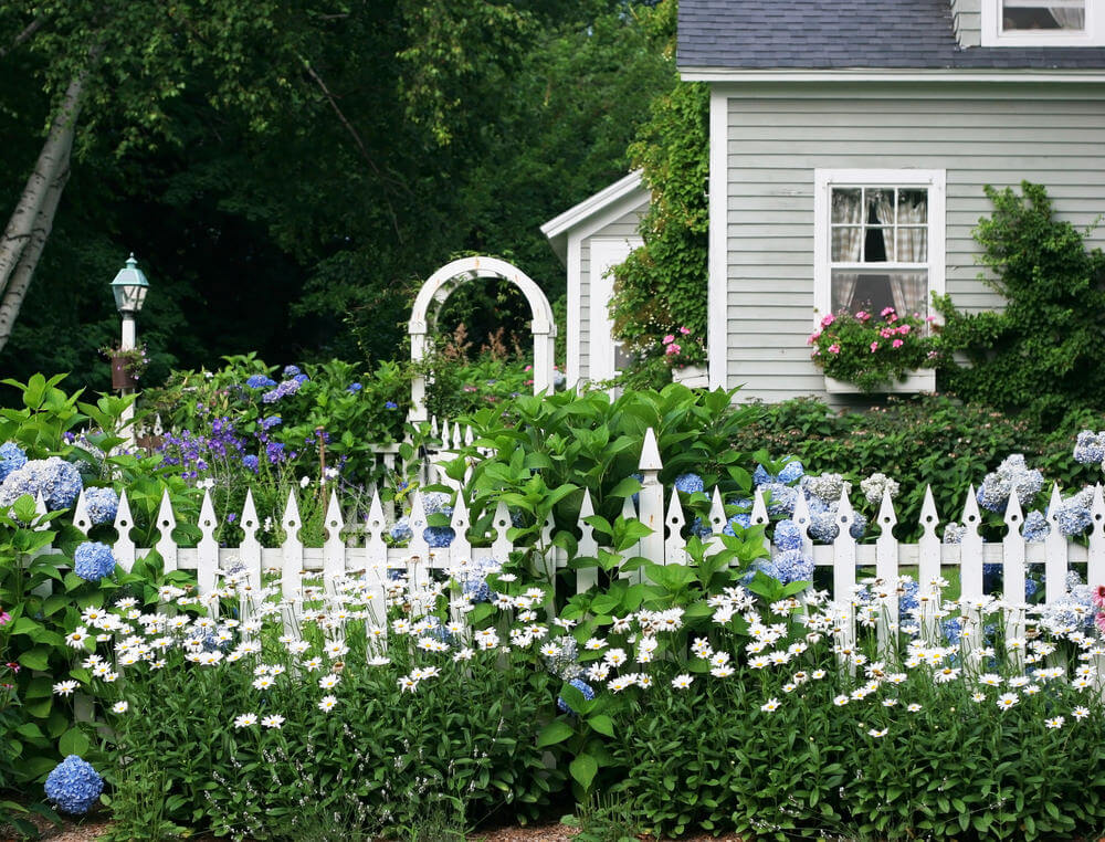 Lush garden in front and behind white picket fence that includes hydrangeas, daisies and other plants.