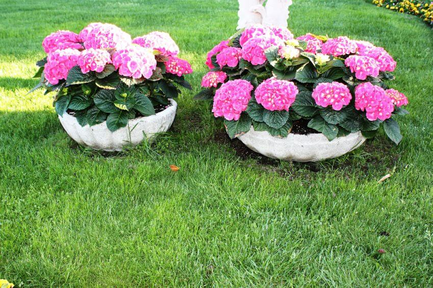 Arrange your hydrangeas from small to big vases to give more depth in your garden. You can even use this arrangement to help kids understand the differences between sizes.