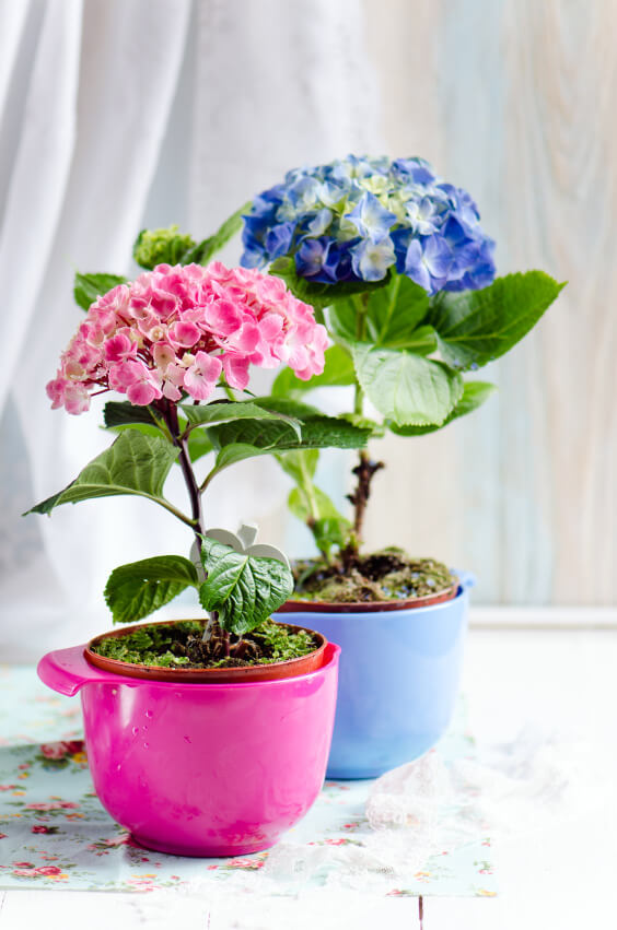 25 hydrangea flower pot and planter arrangements photos home use colored vases to add a playful vibe to your hydrangea arrangement remember to only mightylinksfo
