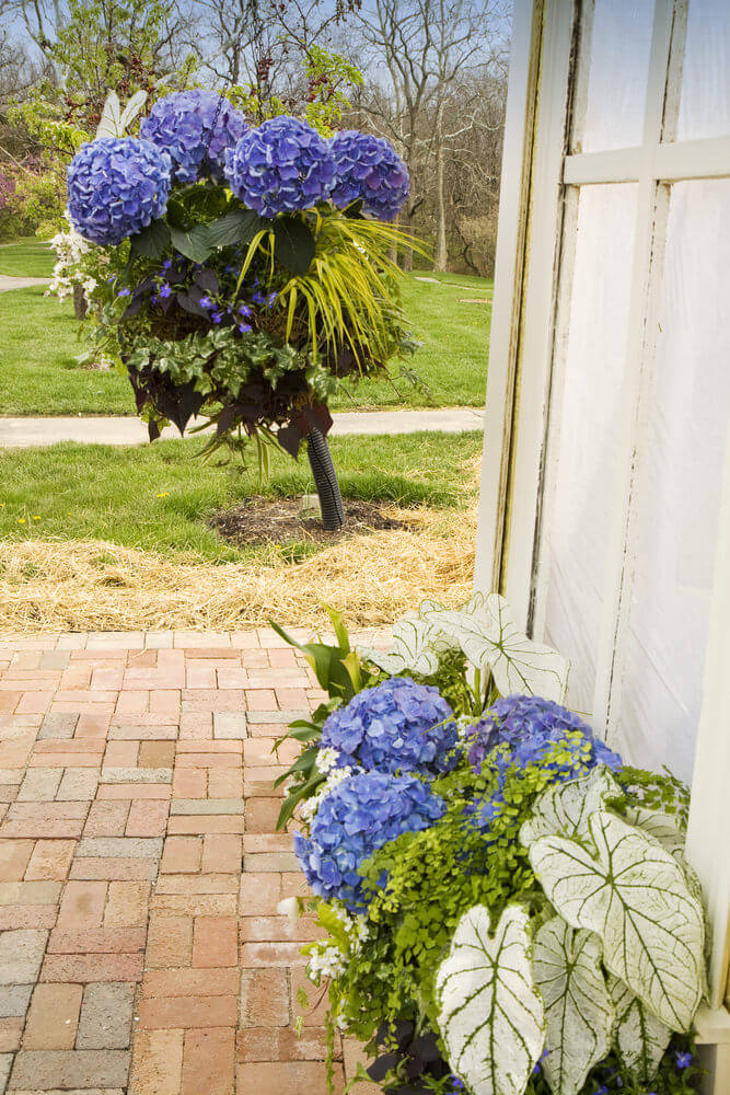 If you have a tall plant in your backyard or front yard, add some color to it with hydrangeas. Use a variety of other plants and style it like a wedding bouquet.