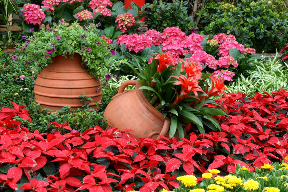 If your garden has mostly has red, yellow, and orange flowers, it is best to accentuate it with pink hydrangeas to balance out the shading from your flowers.
