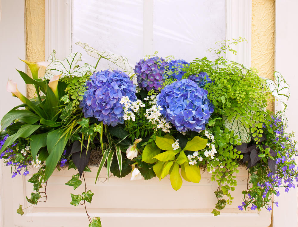 Arrange your hanging vases or mini garden similar to how gift boxes or gift baskets are designed. In this case, the leafy plants serve as the ornate wrappings while the hydrangea stand out as the gift.