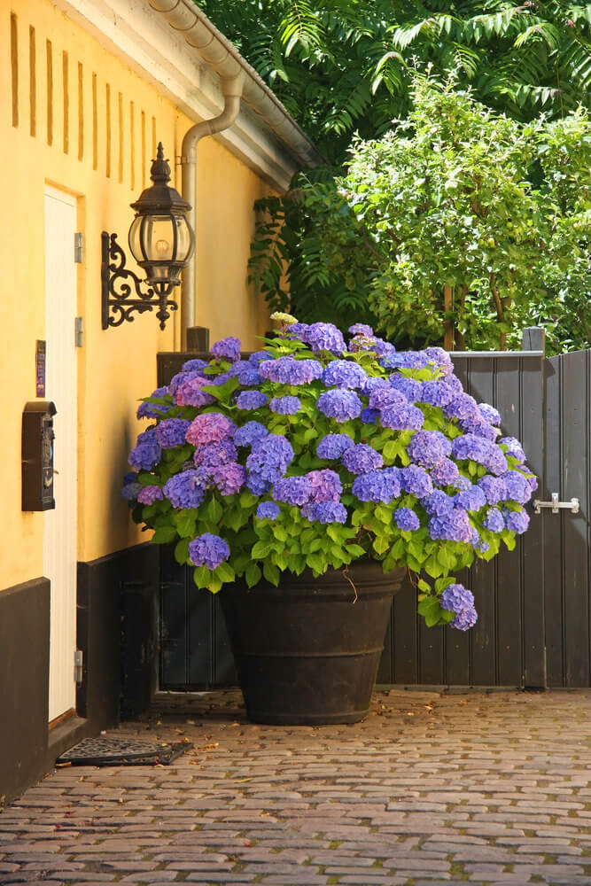 25 hydrangea flower pot and planter arrangements photos for Landscape arrangement