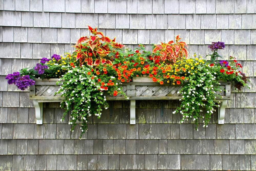 Here is a flower box that is attached to a shingled overhanging roof.