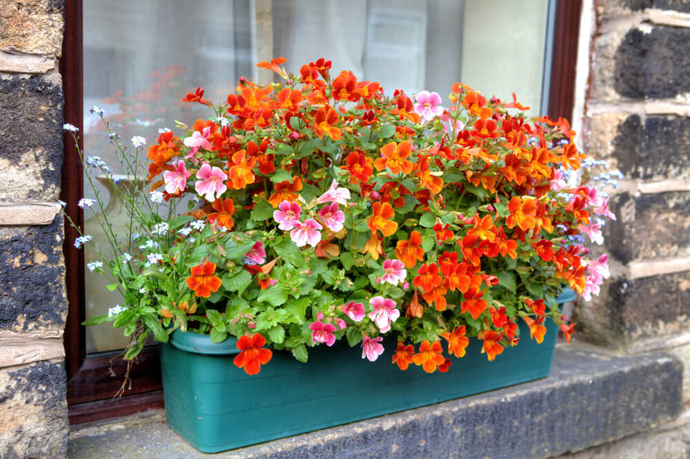 Example of a plastic flower box placed on the ledge outside of a window overflowing with orange flowers.