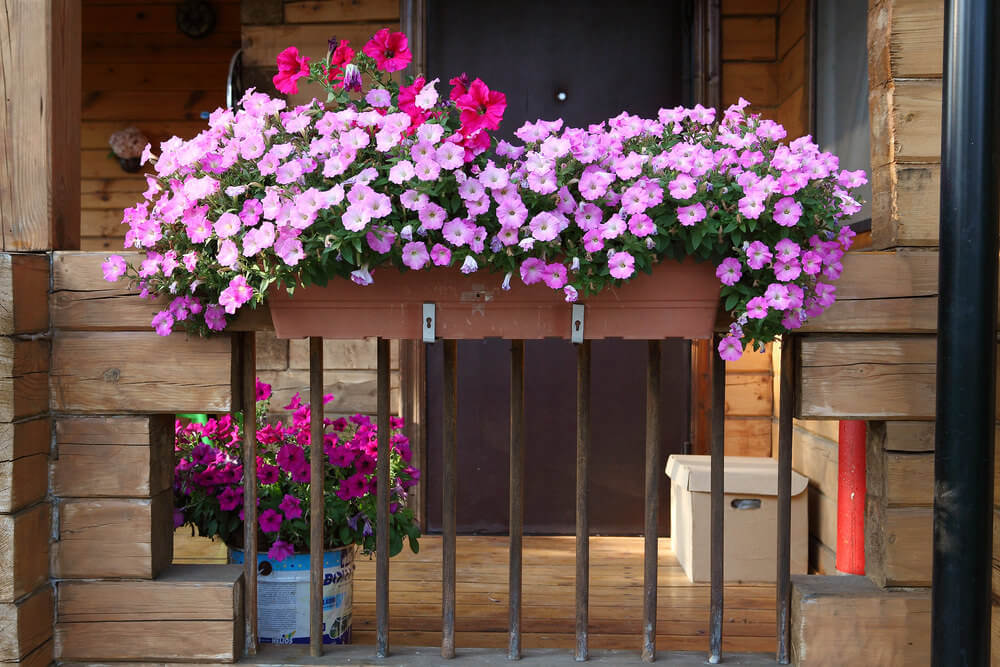 Flower box placed on the railing of a small balcony of a rustic home filled with pink and fuchsia flowers.